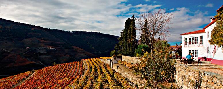 Roteiro para aproveitar o melhor do vinho em Portugal - nacionalidade portuguesa