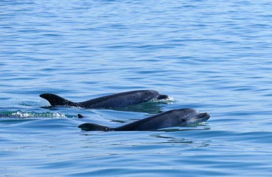 golfinhos Portugal - nacionalidade portuguesa